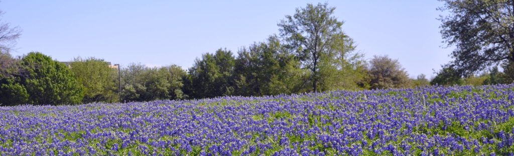 Home of the Official Bluebonnet Festival of Texas